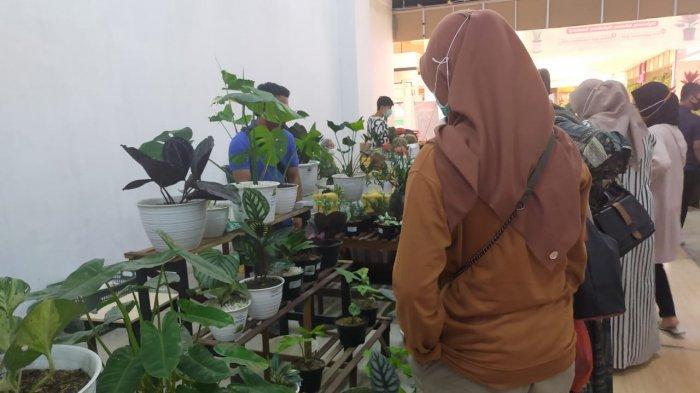 Festival Bunga Kekinian diadakan di Atrium Mall Transmart Jambi pada 11 hingga 13 September dengan kategori bunga Aglonema, Adenium, Phylodenro dan Sensivera.