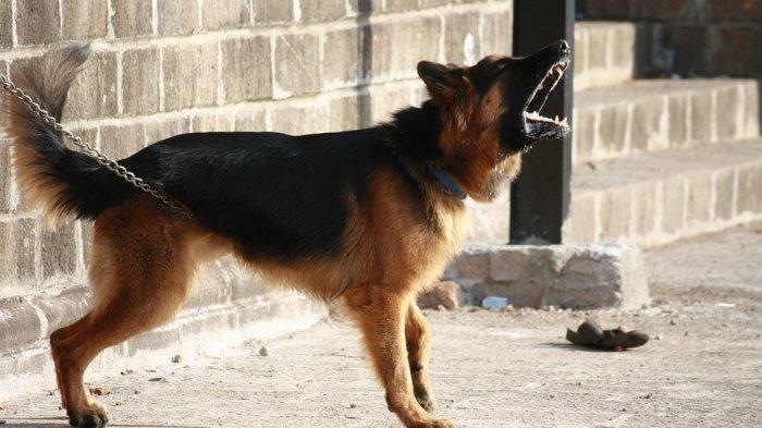 VIRAL - Berniat Tolong Siswa Dari Kejaran Anjing, Guru Madrasah Dikeroyok Pemilik dan Keluarganya