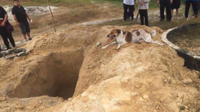 VIDEO: Terharu, Anjing ini Ikuti Mobil Jenazah Hingga Penguburan Sahabat yang Merawatnya