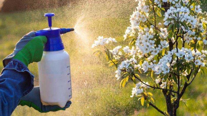 Cara Aman Konsumsi Buah dan Sayur Tanpa Pestisida Agar Terhindar dari Kanker