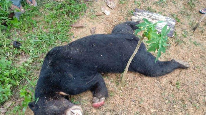 Binatang Liar Bergelimpangan Mati di Tebo, BKSDA Jambi Turun ke Lapangan, Ini Katanya