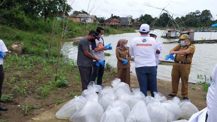 BKIPM Jambi melakukan Restocking Benih Ikan Nilem sebanyak 20.000 ekor di Danau Teluk Kenali Kota Jambi