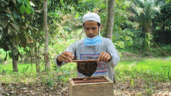 Budidaya Madu Lebah, Ini 10 Manfaat Madu untuk Kesehatan Tubuh