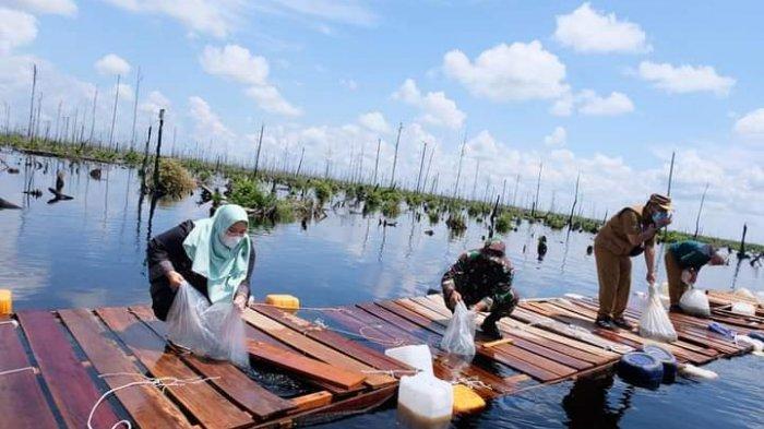 Bupati Muarojambi Tebar Ribuan Benih Ikan Toman di Kanal Lahan Gambut Desa Puding