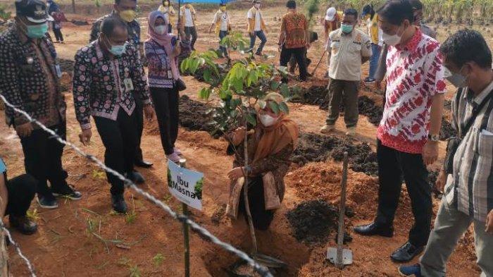 Bupati Muaro Jambi Masnah Busro melakukan penanaman pohon.