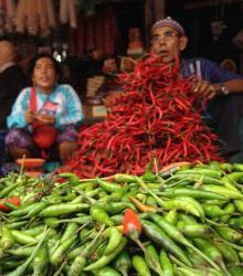 Harga Cabai Rawit di Jambi Menjulang Tinggi, Naik 30 Persen dalam 1 Hari