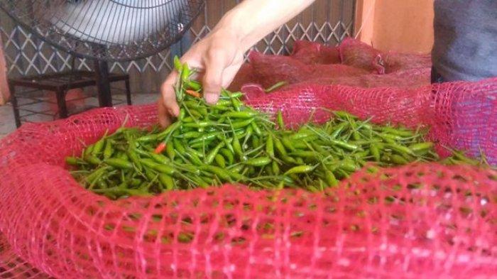 Harga Cabai Rawit Turun, Jambi Terima Pasokan dari Jawa Timur