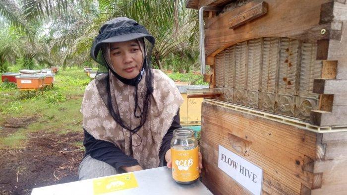 Lowongan Kerja Jambi, Untuk Jadi Beekeeper di Perusahaan Produsen Madu Terbesar