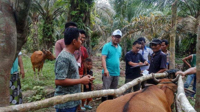 Disbunnak Muarojambi Dorong Masyarakat Gunakan Dana KUR untuk Produktivitas Peternakan Sapi