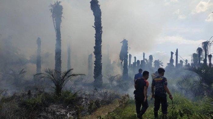Diduga Gara-gara Puntung Rokok, Setengah Hektar Lahan Kosong di Bungo, Terbakar