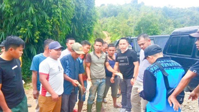 Diduga Diracun Ribuan Ikan di Sejumlah Lubuk Larangan Sungai Batang Merao Kerinci Mati Mengapung