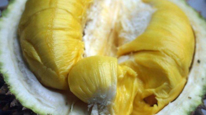 durian musang