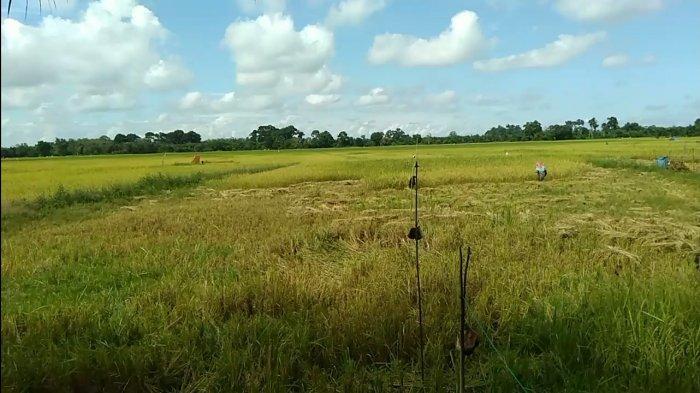 Sembilan Kecamatan di Tanjabbar Masuk dalam Rencana Lokasi Food Estate