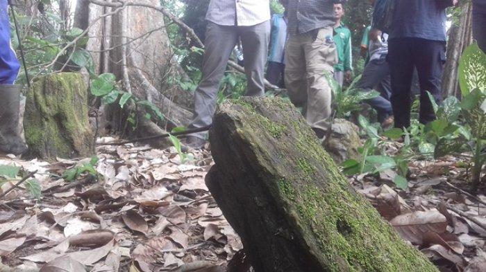 Temuan Empat Fosil Kayu Tak Jauh Dari Kawasan Candi Muaro Jambi, Misteri, Warga Tak Berani Bongkar