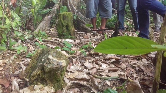 Tegakan empat kayu setinggi sekitar 30 cm masih kokoh di belakang rumah salah seorang warga bernama bang Code, di RT 8 Dusun Semambu Bunting, Desa Jambi Kecil, Kecamatan Maro Sebo, Kabupaten Muarojambi, Provinsi Jambi.   Kayu jenis sungkai itu kini telah menjadi fosil kayu.