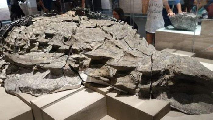Awet Sampai Isi Perut, Ini Jenis Dinosaurus 110 Juta Tahun Lalu, Ada Di Museum