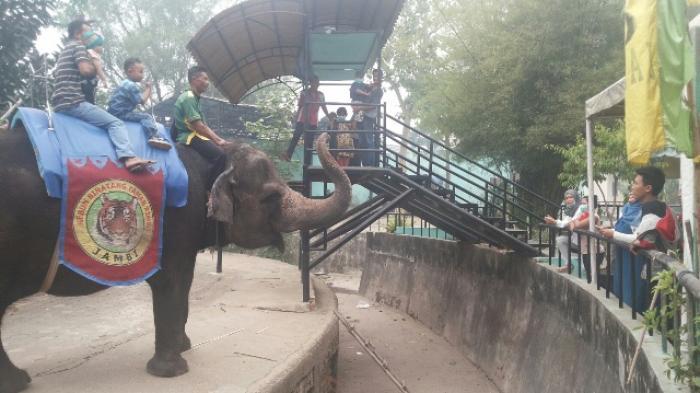 BKSDA Jambi Benarkan Gajah Betina di Kebun Binatang Taman Rimbo Jambi Mati