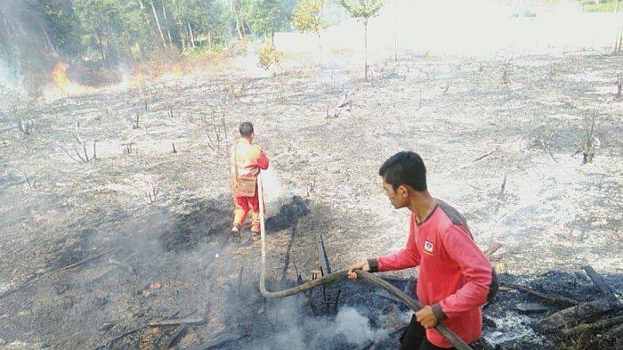 Hari Ini, Kebakaran Lahan di Sarolangun, Terjadi di 4 Titik dalam Sehari