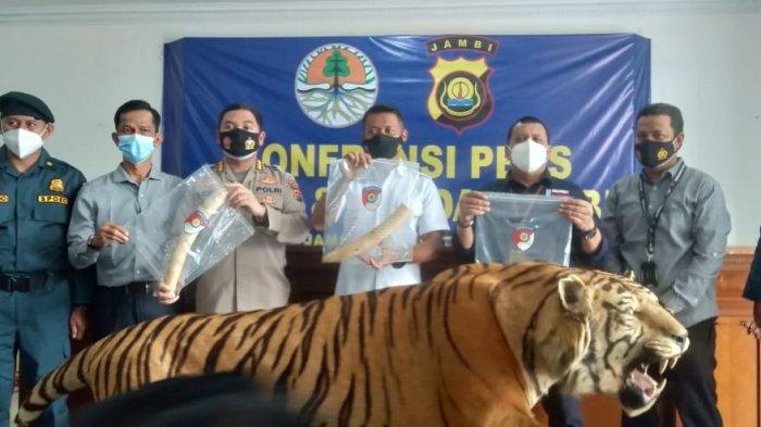 3 Warga Jambi Ditangkap Tim Gabungan Karena Jual Gading Gajah dan Harimau Sumatera Ratusan Juta
