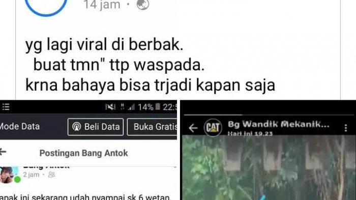 Heboh Postingan Harimau Masuk Kampung di Kecamatan Berbak Tanjabtim, Ini Penjelasan Camat