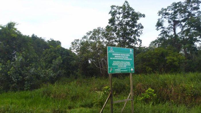 Dimulai dari 2019, Pemkab Tanjabtim Tanam 3.000 Pohon Bakau di Lahan 83 Hektare Hutan Kota