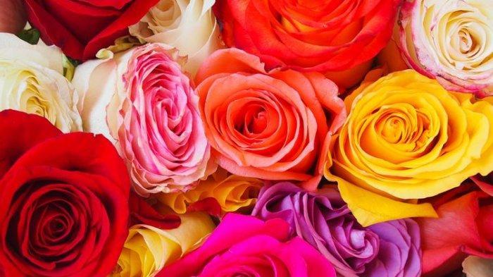 Cara Merawat Bunga Mawar Agar Tumbuh Subur dan Berbunga Lebat