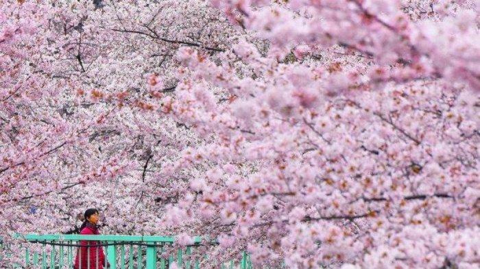 Dari Kastil Osaka Sampai Hiroshima Memorial Bisa Kamu Kunjungi Sambil Tetap Di Rumah Aja