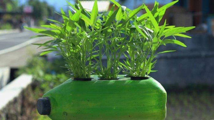 Cara Berkebun Sayur Sendiri di Rumah Lengkap Dengan Tips dan Trik Berkebun