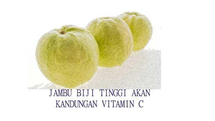 Kandungan Vitamin C Jambu Biji Lebih Tinggi Daripada Jeruk, Ini Manfaatnya Bagi Kesehatan