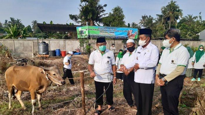 IPHI Provinsi Jambi Potong Delapan Sapi dan Satu Kambing Untuk Kurban