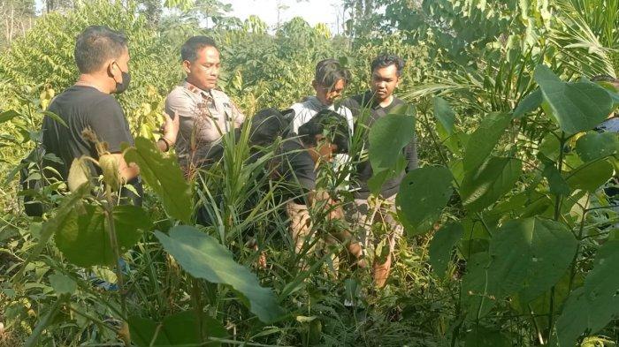 Isdianto ditangkap di kebun miliknya yang berlokasi di Kilometer 08, Desa Pasir Mayang, Kecamatan VII Koto Ilir, Kabupaten Tebo.