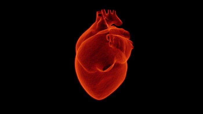 TAK Cuma Berhenti Merokok, Lemak di Perut Juga Harus Diatasi, Ini Kebiasaan Baik Agar Jantung Sehat