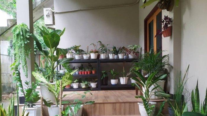 Kaktus Cendol Nan Unik, Solusi Bagi yang Sibuk Agar Rumah Tetap Indah dan Menarik