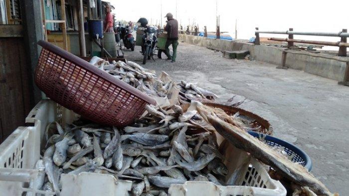Angin Kencang & Ombak Tinggi di Perairan Tanjabtim Bikin Nelayan Takut Melaut, Harga Ikan Jadi Naik