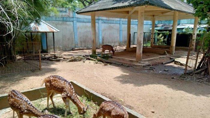 Rusa Tutul Malang di Taman Rimba Jambi Butuh Suasana Kandang yang Tenang