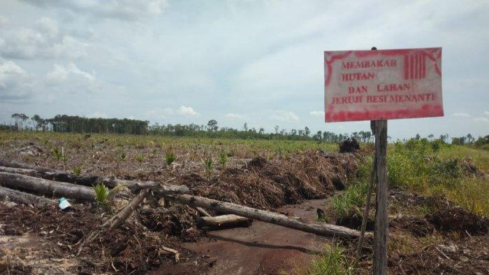 Kondisi kawasan lahan bekas terbakar di Kecamatan Dendang, Kabupaten Tanjung Jabung Timur