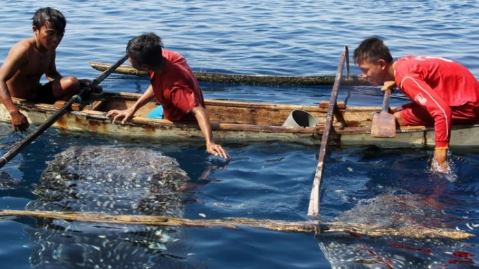 Anak-anak bermain dengan hiu paus di Botubarani Gorontalo. Kawasan ini akan menjadi pendukung kawasan wisata geopark