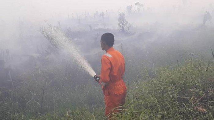 Awal Oktober Sudah 5 Titik Api Terjadi, Luasan Lahan Terbakar Mencapai 150 Hektare