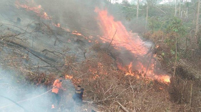 5 Jam Baru Padam, 2,5 Hektare Lahan Sawit dan Lahan Kosong di Bungo Terbakar