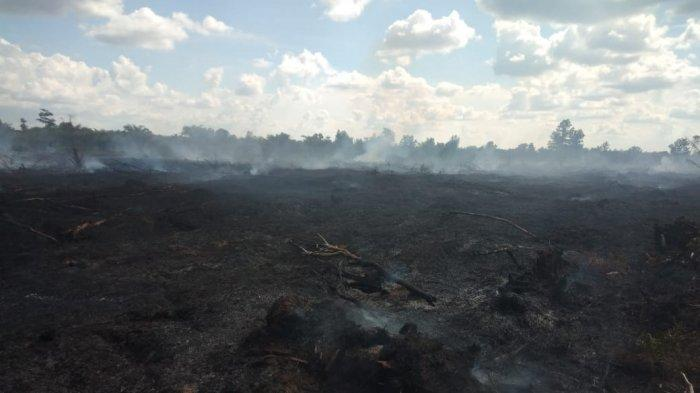 Walhi Kupas Kebakaran Berulang dan Tantangan Restorasi Gambut di Wilayah Perusahaan