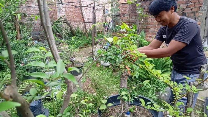Kisah UMKM Yanti Bibit Buah di Kota Jambi, Berawal dari Hobi Jadi Mata Pencarian