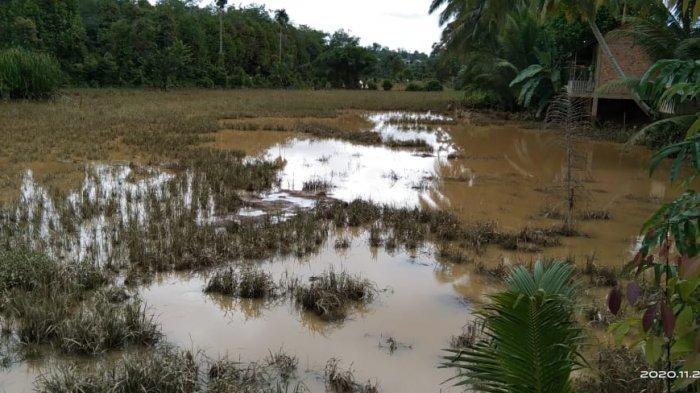 Seribu Hektare Lahan Pertanian di Provinsi Jambi Terendam, Petani Bisa dapat Ganti Rugi Bibit