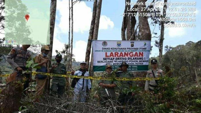 Balai Besar TNKS: 2.000 Hektare Hutan di Gunung Kerinci Telah Dirambah