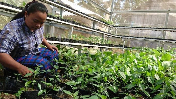 Kemunculan Investor dan Ancaman Konflik Bagi Petani Gaharu di Desa Olak Kemang
