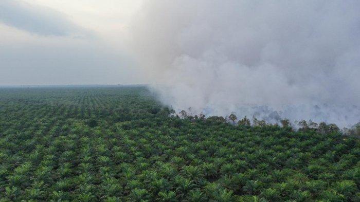 Banyak Areal Konsesi Perusahaan di Jambi Terbakar, KKI Warsi sebut Pemerintah Harus Cek Kepatuhan