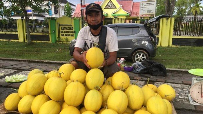 Buah Melon Golden di Batanghari Berwarna Kemasan, Banyak Warga Belum Tahu Buah Jenis Apa