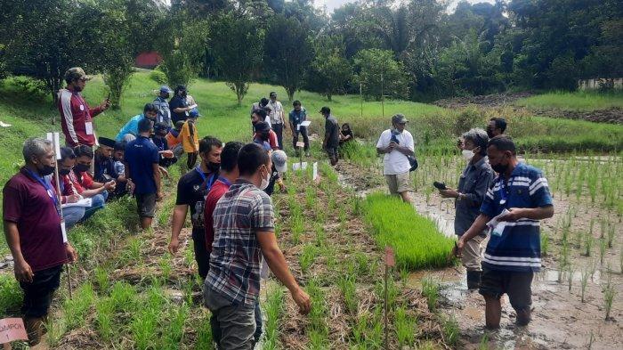 Mengenal Metodologi Mulsa Organik untuk Tingkatkan Hasil Panen dan Kesuburan Tanah
