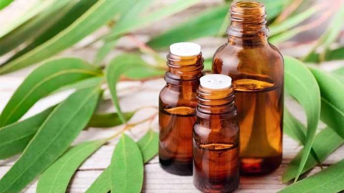 Manfaat Minyak Kayu Putih untuk Mengatasi Sesak Napas dengan Cara Menghirup Uapnya