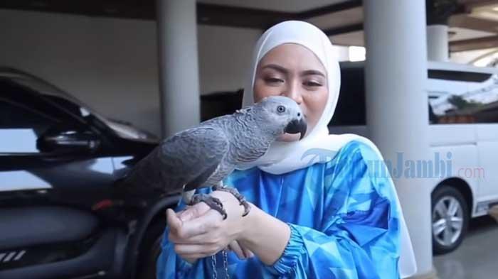 Nathalie Holscher Beli Burung Kakaktua African Grey, Peliharaan Istri Sule Ini Jenis Burung Cerdas