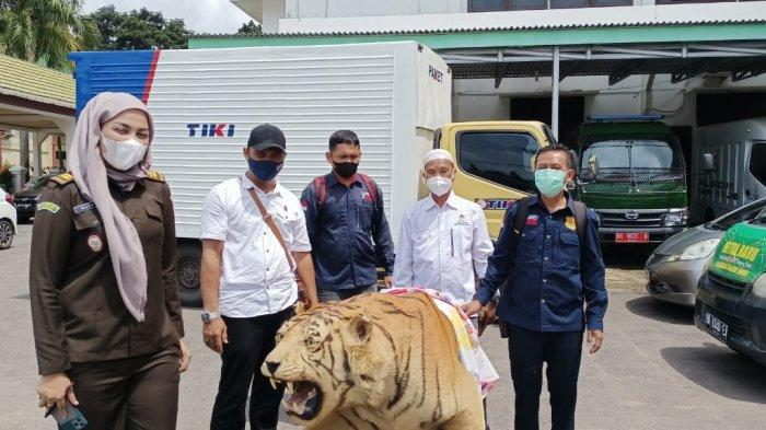 Penjual Offset Harimau Sumatera Dilimpahkan ke Kejaksaan, Satu Pelaku Mantan Kepala Desa di Bungo